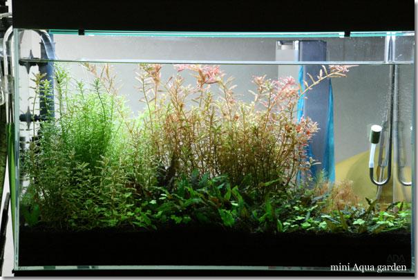 60cm_20120225.jpg