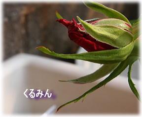 baraaa_20120510092152.jpg