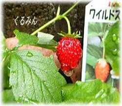 hanaac_20120602104953.jpg