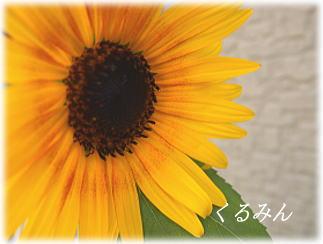 himawariaa_20120718154936.jpg