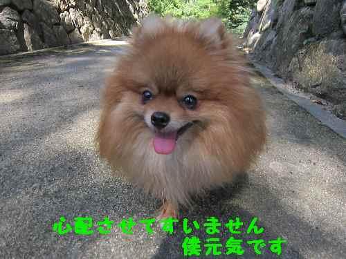 syugenki1.jpg