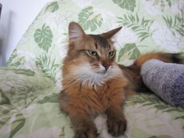 王様ネコのルディニャ