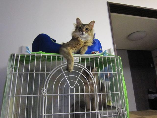 猫らしく屋根に住むんだニャ