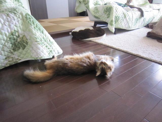 床暖にしてくれニャ