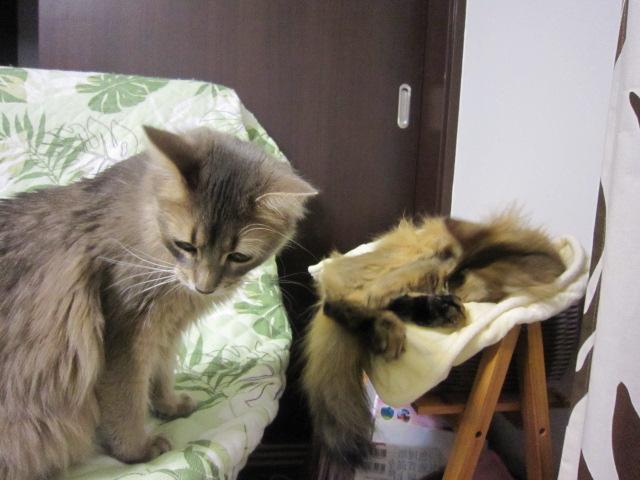 寝るネコは育つのかな?