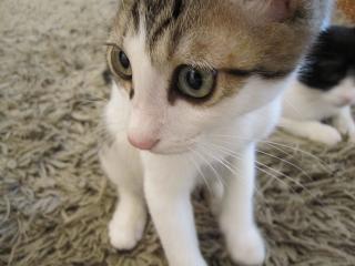 猫 018+
