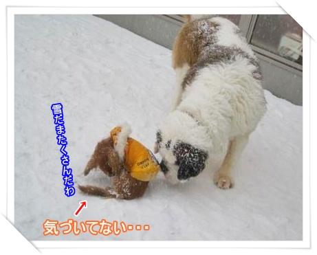 IMG_8475_convert_20101219221427.jpg