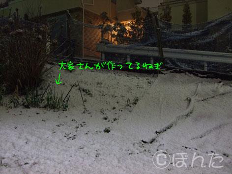 2010雪_3