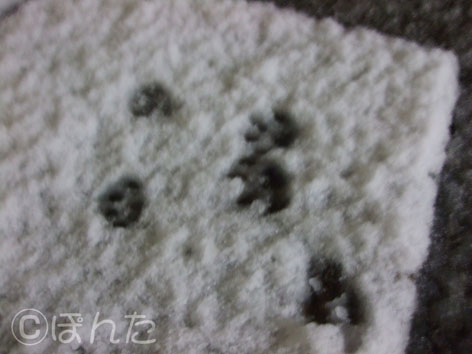 2010雪_1
