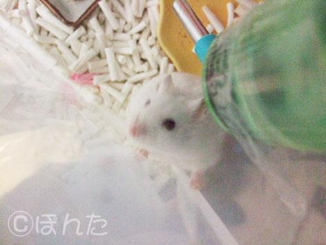 ぷりん_きゃっきゃっ2