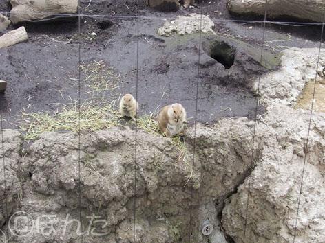 動物園_4