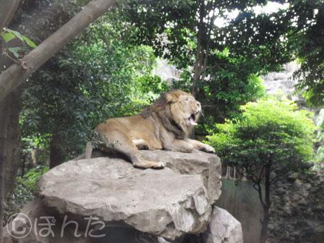 動物園_8