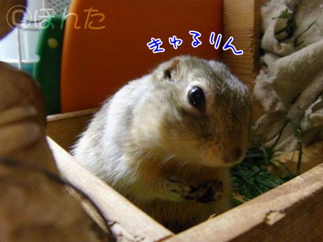 ぴきぴき_まったり2