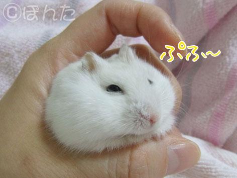 ぷりん_ぶちゃ5