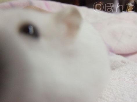 ぷりん_ぶちゃ1