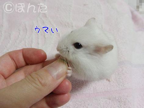 ぷりん_誕生日4