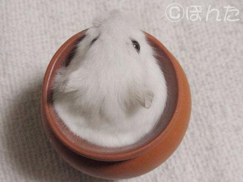 ぷりん_プリン2