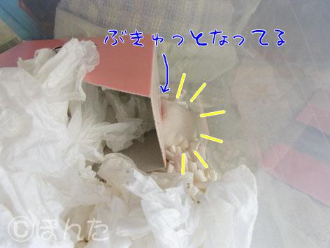 ぷりん_実家4