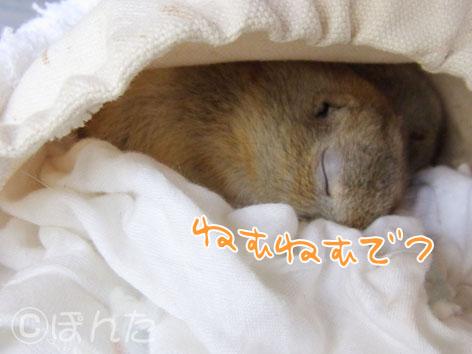 ぴきぴき_実家2