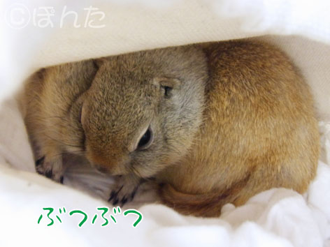 ぴきぴき_実家7