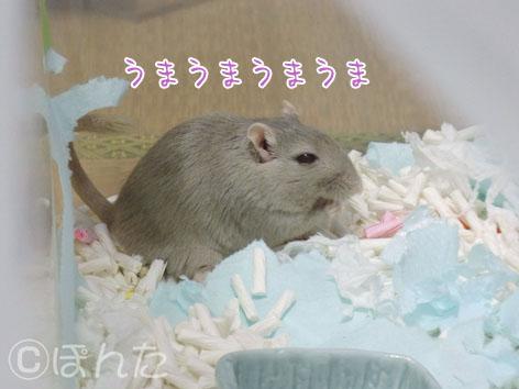あんず子_実家初日3