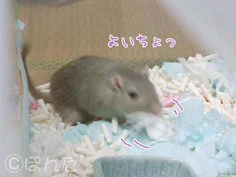 あんず子_実家初日4