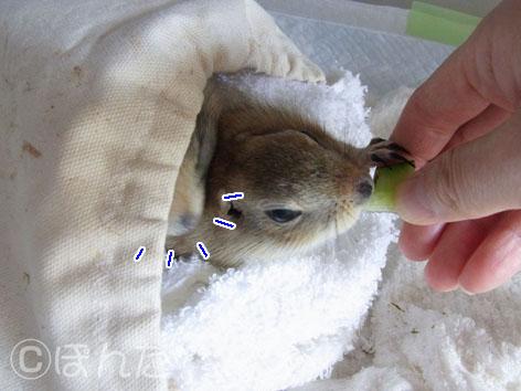 ぴきぴき_キュウリ3