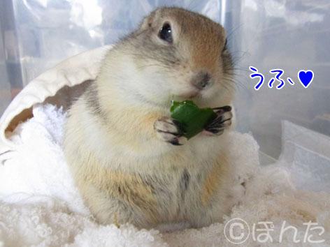ぴきぴき_キュウリ6