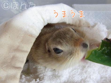 ぴきぴき_キュウリ2