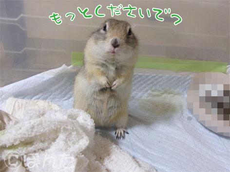 ぴきぴき_スイカ4