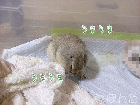 ぴきぴき_スイカ7