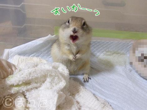 ぴきぴき_スイカ5