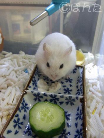 ぷりん_豆腐