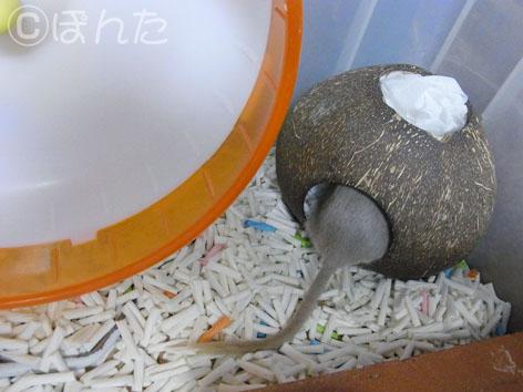 あんず子_お掃除3