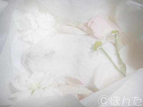 ぷりん_バイバイ1