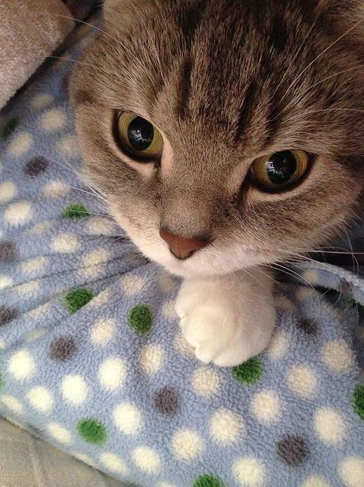 20140112まりん布団猫