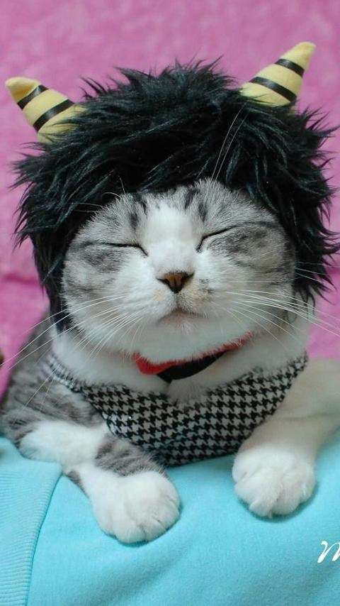おに猫ミリン1