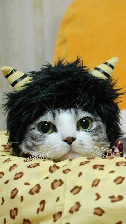 おに猫ミリン2
