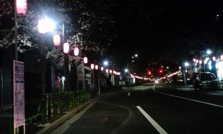 100329_中野通り_夜桜1