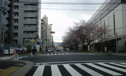 100329_千川通り_1