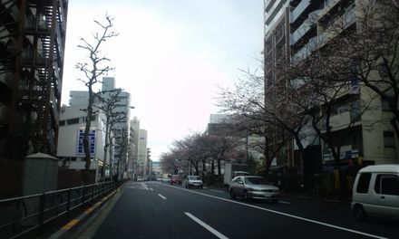 100329_千川通り_2