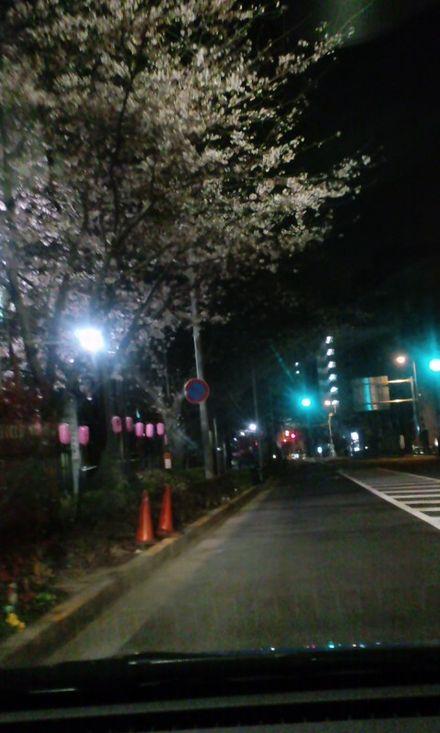 100329_中野通り_夜桜2