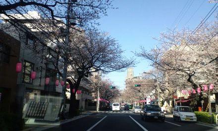 100330_中野通り_1