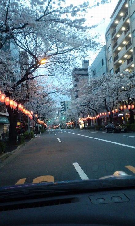 100402_中野通りの桜_02