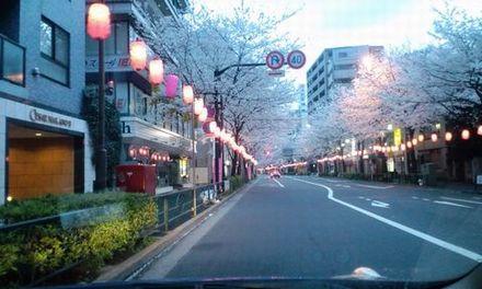 100402_中野通りの桜_01