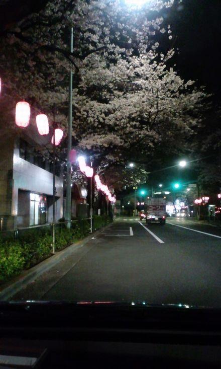 100403_中野通りの夜桜~02
