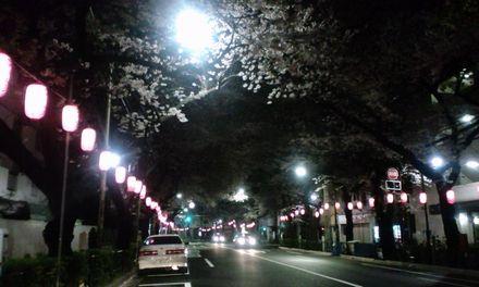 100403_中野通りの夜桜~03