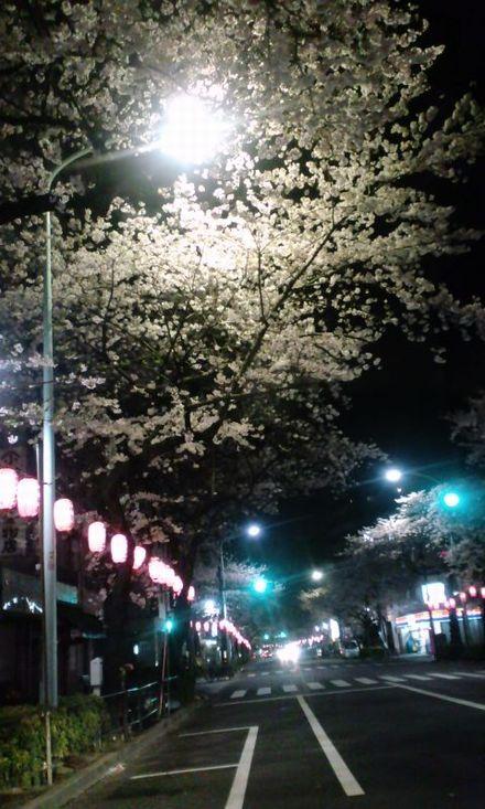 100403_中野通りの夜桜~01