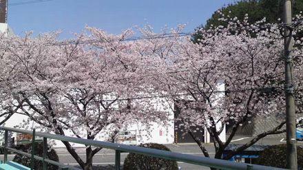 100403_とも兄がくれた桜の写真~01
