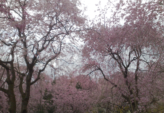 wind of pink